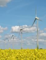 Windkraft und Raps: woher kommt die erneuerbare Energie?